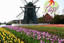 Справжня казка - парк квітів Кейкенхоф