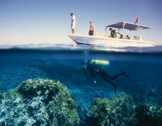 Подводный мир Красного моря у берегов Иордании