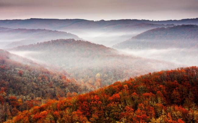 Туман окутал лес вдоль реки Велика, Болгария