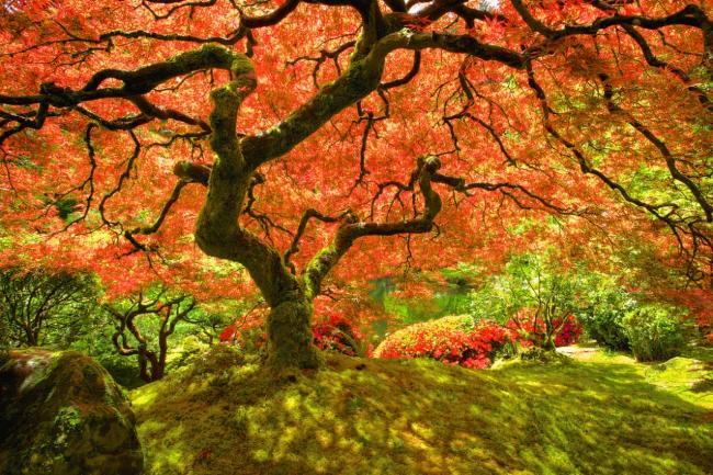 Старое дерево, под которым хочется сидеть и читать, Портленд, США