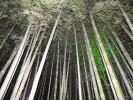 Бамбуковые заросли прямо в центре города