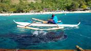 Остров Себу. Китовые акулы в Ослобе