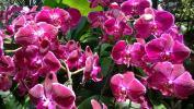 Сингапур. Сад орхидей