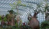 Сингапур. Оранжереи в Садах у залива