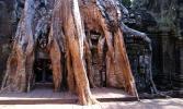 Камбоджа. Сиемреап. Та Прум