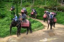 Немецкая туристка погибла, катаясь на слоне в Таиланде