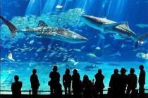 В Анталии откроют гигантский аквариум