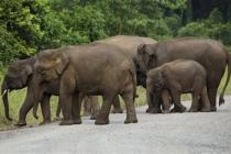 В природном заповеднике на Барнео слон убил туристку