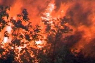 На Канарских островах и в Хорватии по настоящему жарко - пожары