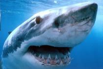 Акулы продолжают поедать туристов в Шарм Эль Шейхе