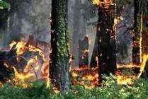 Пожар в Бодруме локализован