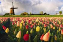 Ярмарка тюльпанов в Голландии