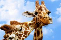 В ОАЭ откроют огромный сафари-парк