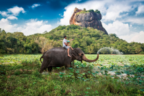 Спрос на Шри-Ланку неожиданно вырос