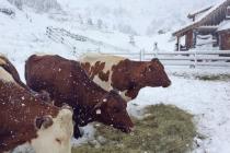 Альпы засыпало снегом