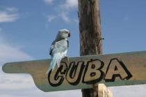 Куба подорожает на 750 гривен
